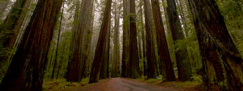 G. I am planning a trip to drive through the redwoods and do a much needed photography trip.
